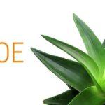 13 Amazing Benefits And Uses Of Cordyceps forecasting