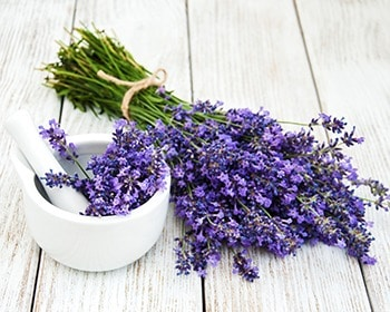 lavender essential oil contains over 200 phytochemicals