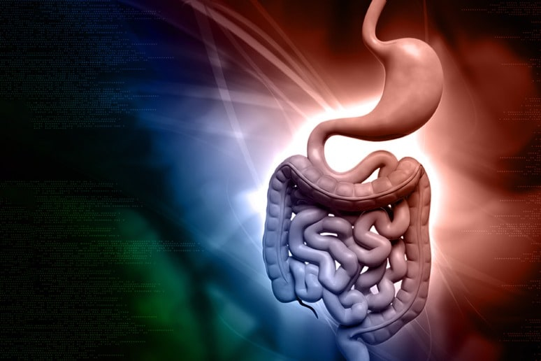 3 Types of Enzymes Effecting the Stomach