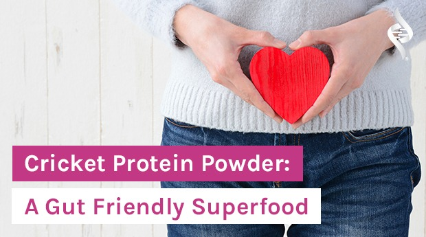 Is Cricket Protein Powder Really a Gut-Friendly Superfood?