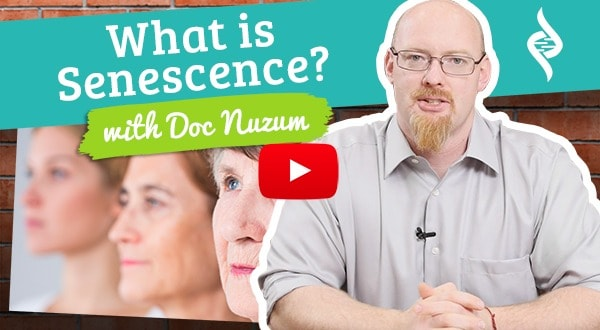 What is Senescence Doc Talks with Dr. Daniel Nuzum
