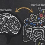The Effect of Gut Bacteria on Mood