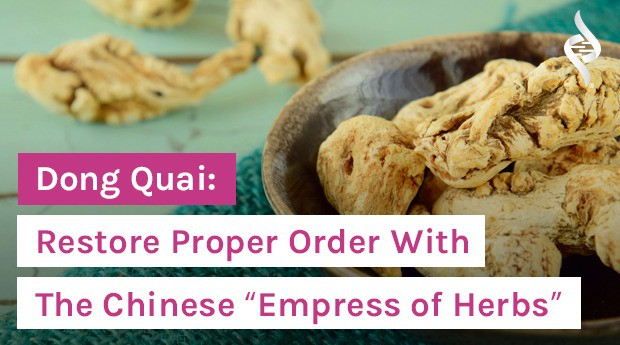 """Dong Quai: Restore Proper Order With The Chinese """"Empress of Herbs"""""""