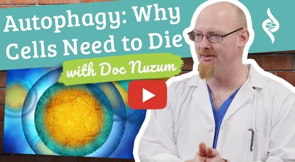 autophagy and why cells need to die