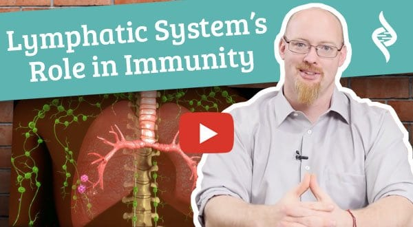 Lymphatic Systems role in immunity