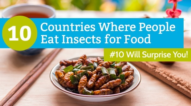 10 countries eating insects featured image