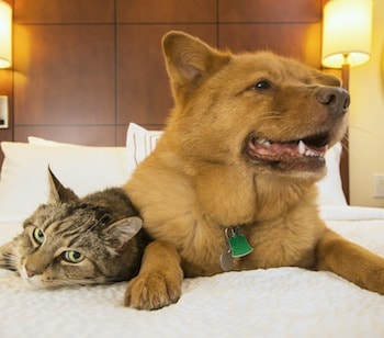 Pets on the bed-trouble sleeping