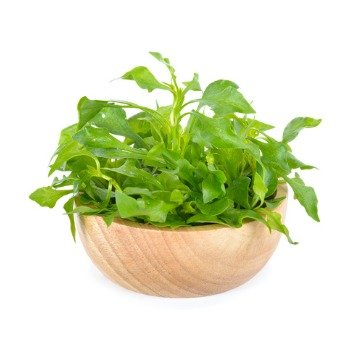fresh watercress in wooden bowl