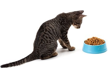 cat staring at a bowl of kibble