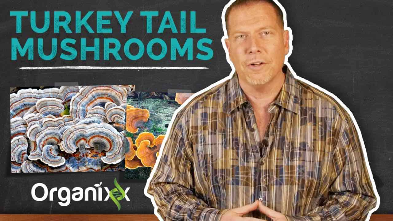 Turkey Tail Mushrooms Explained by Ty Bollinger