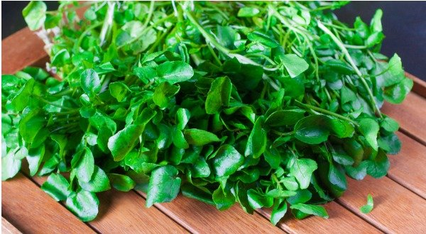 watercress salad nasturtium officinale
